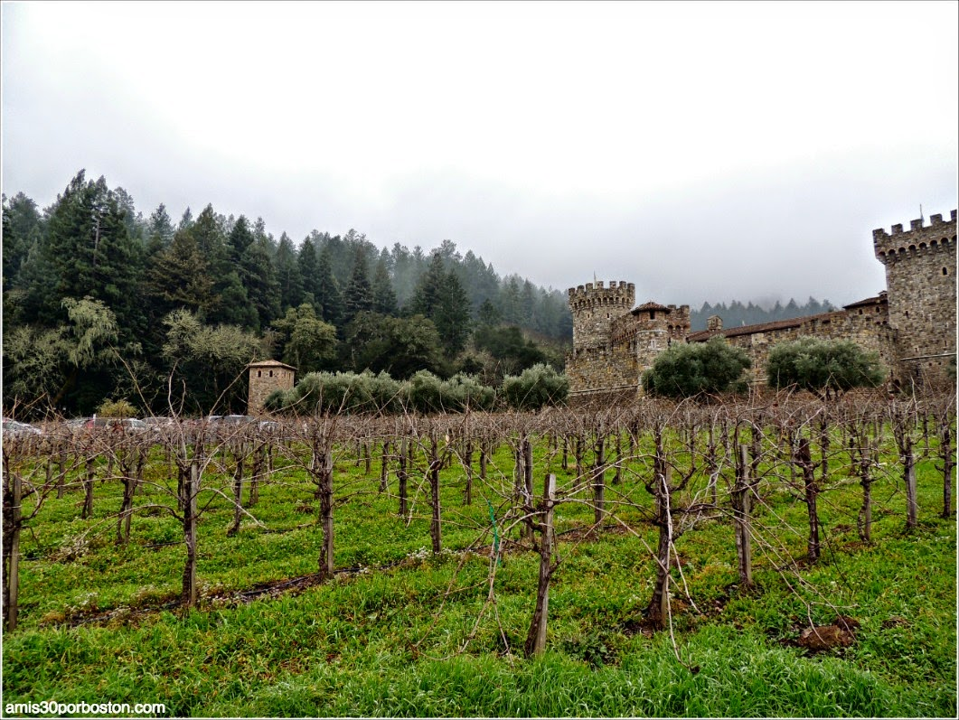 Ruta por las Bodegas del Valle de Napa: Viñas del Castello di Amorosa