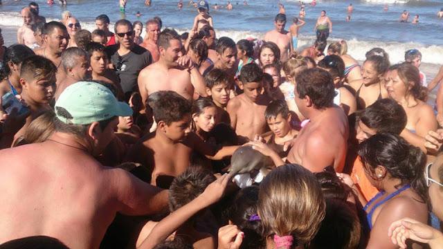 Sessão de selfies mata golfinho