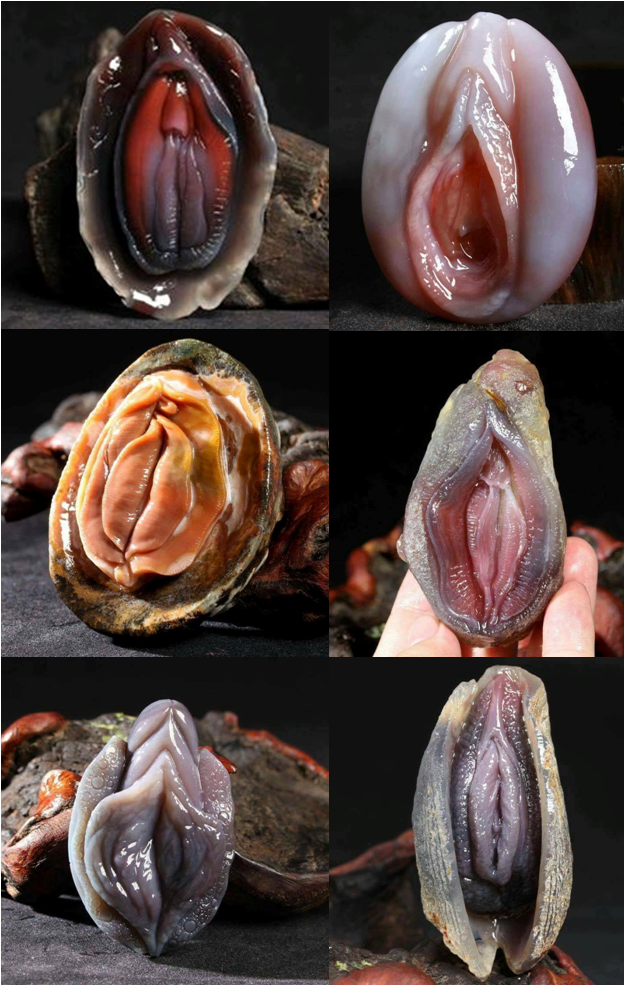 This Shellfish's Unique Appearance Made The Internet Go Crazy! Why? See It For Yourself!