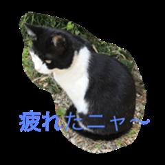 love cat name is kuro