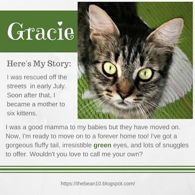 http://www.adoptapet.com/pet/19055037-rochester-new-york-cat