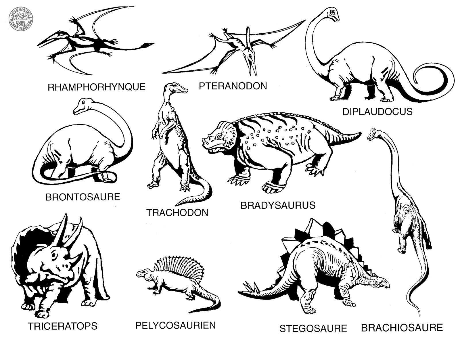 Coloriages pour tous les dinosaures - Dinosaures dessin ...