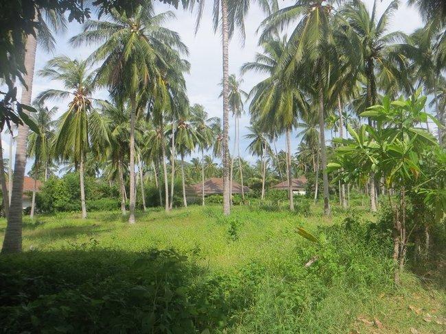 полянка с пальмами