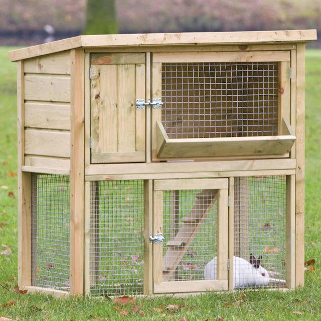 5 mẹo chăm sóc thỏ đơn giản