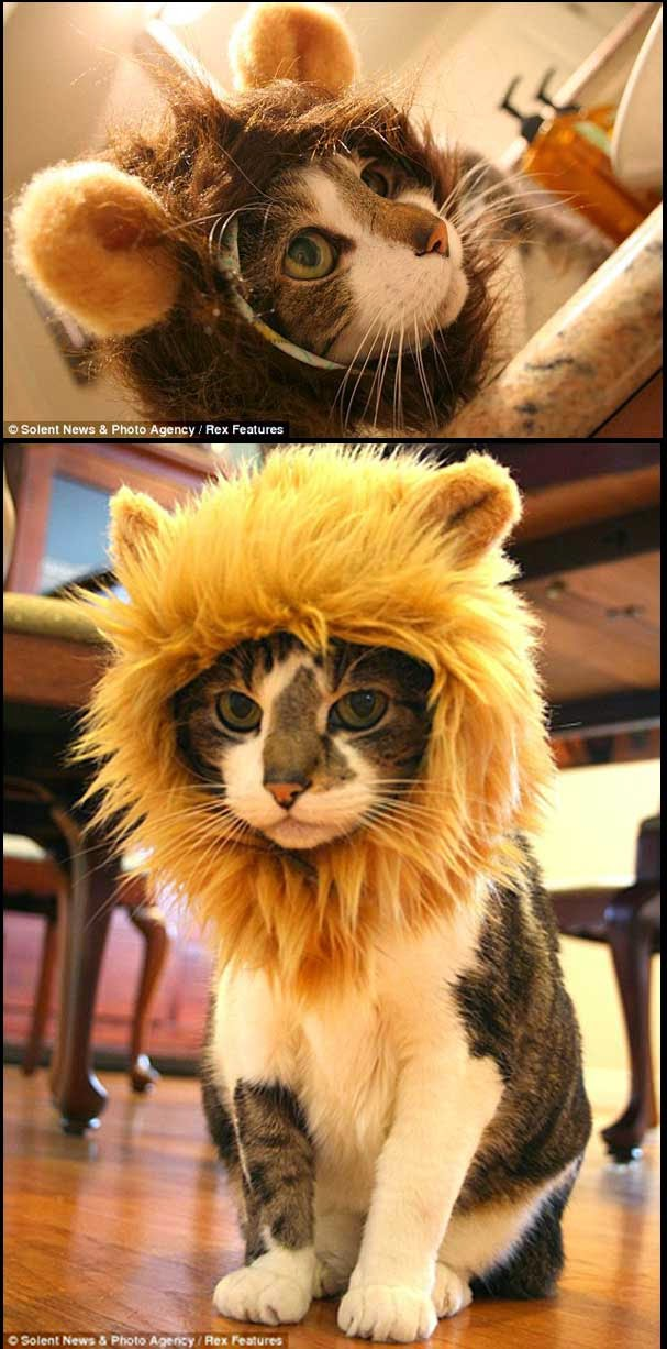 Trend Tukarkan Kucing Anda Kepada Singa el Siot