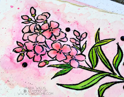 #cardbomb, Maria Willis, Stampin' Up!, Southern Serenade, watercolor, flowers, happy birthday, technique, cards, stamping, handmade, crafty, creative, ink, paper, papercraft, color, diy, rubber stamping, card making, color, gift giving