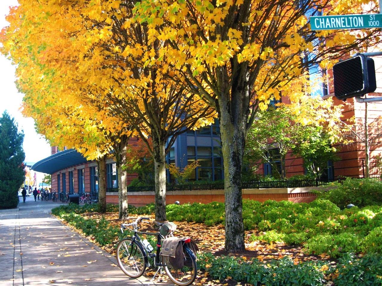 Bridgestone CB-Zip, fall , Eugene Oregon, B-Stone CB-Zero, trees, leaves, bike