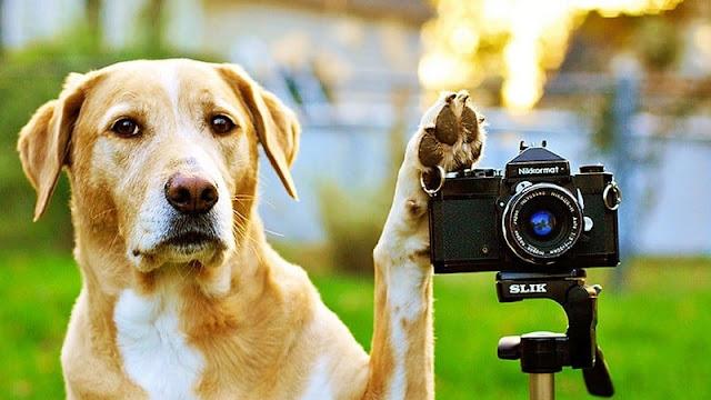 seekor anjing akan mengambil foto menggunakan kamera DSLR