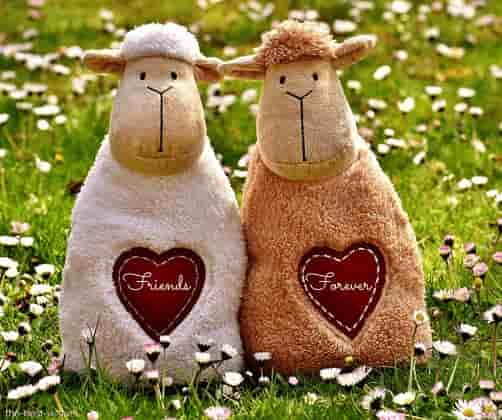 sheep heart with friends forever