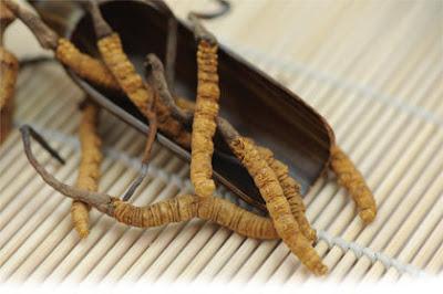 Đông trùng hạ thảo có rất nhiều sản phẩm tinh chế giá rẻ