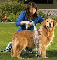 como bañar al perro