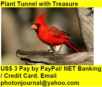 Plant Tunnel with Treasure