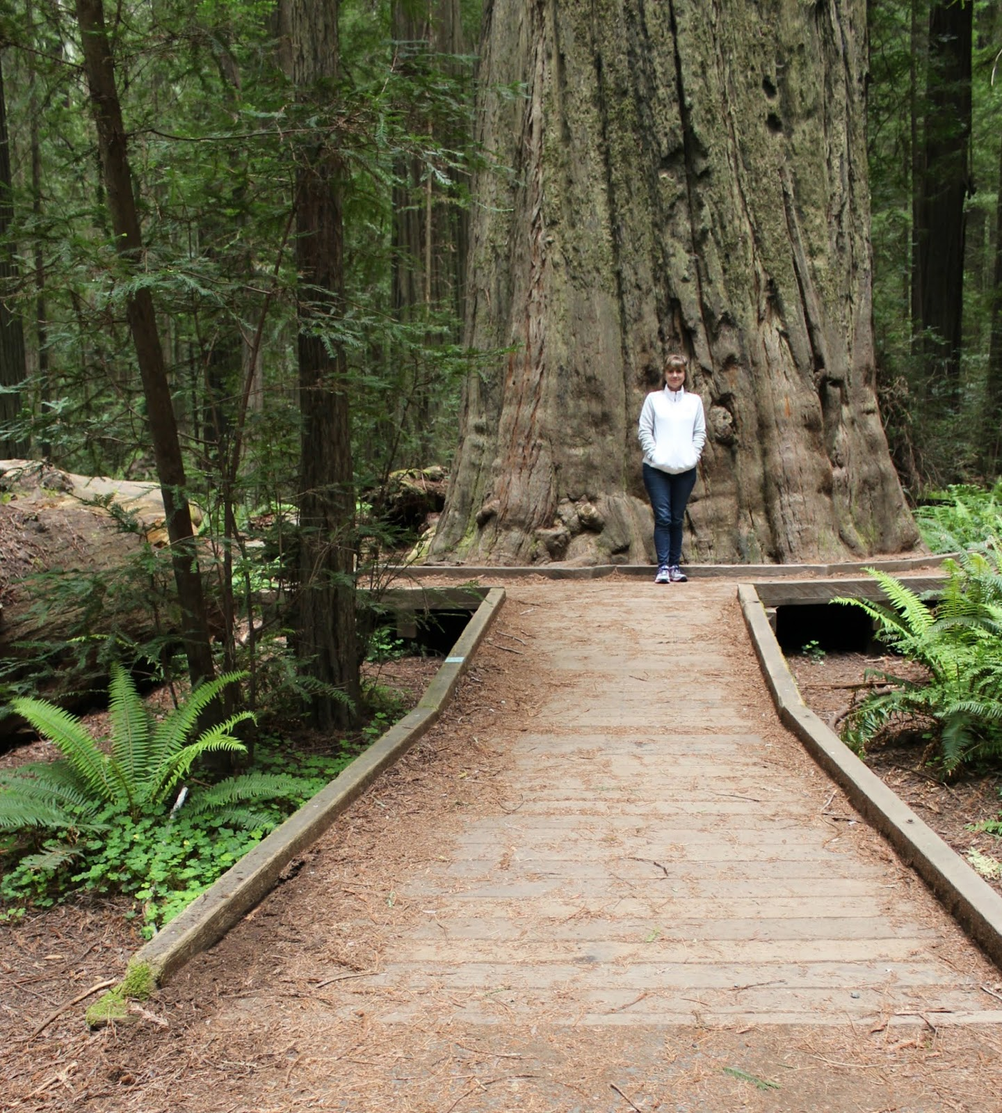 Humboldt Redwoods - Avenue of the Giants - Redwood Trees - bucket list trip