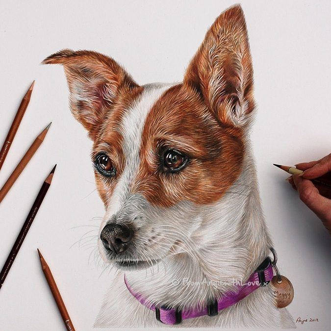 02-Jack-Russell-Terrier-Meggy-Angie-A-Pet-and-Wildlife-Pencil-Drawing-Artist-www-designstack-co