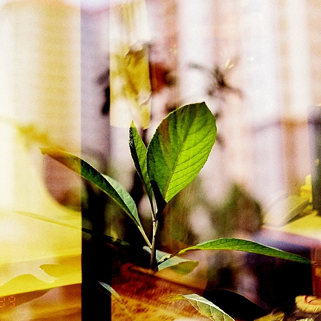 #AnalogDiary A Garden Ensemble, AF Nikkor 50mm F1.8 D 04