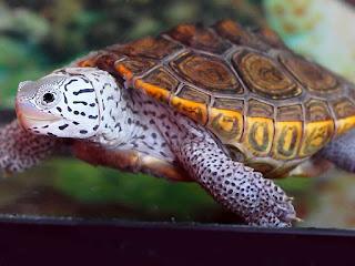 menghilangkan-jamur-kura-kura.jpg