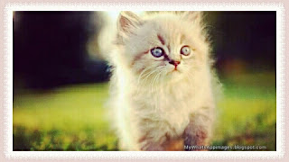 Cute Baby Cat Images