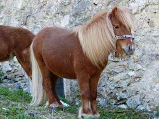 ciri ciri kuda Yang Wajib Anda Tahu Beserta Manfaatnya