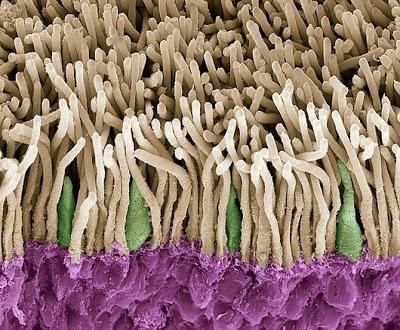 sel batang pada retina mata