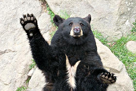 black bear family 2 | Animals | Pinterest |Funny Black Bear Family