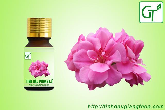 Tinh dầu hoa Phong Lữ nguyên chất