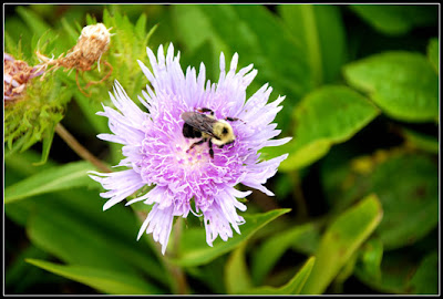 purple flower with bee on it