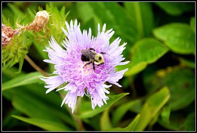 purple flower with bee on it
