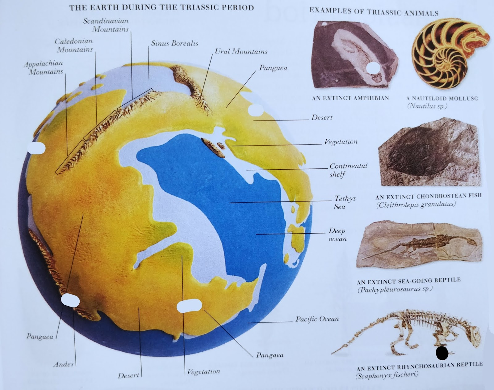 Triassic period and jurassic period the learning book knowledge the earth during triassic period gumiabroncs Choice Image