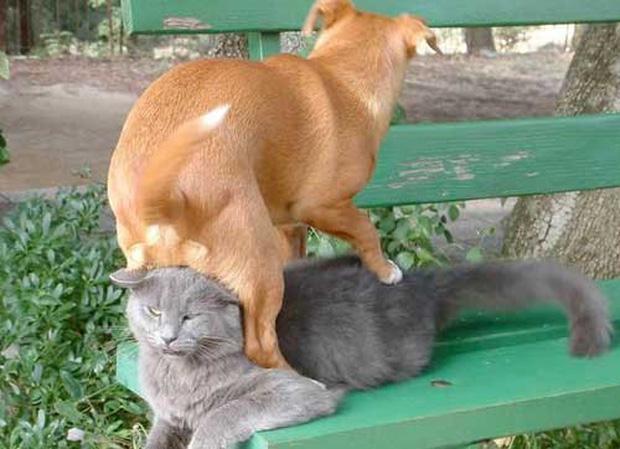 12 chú chó có số có má trong giới ao hồ động vật
