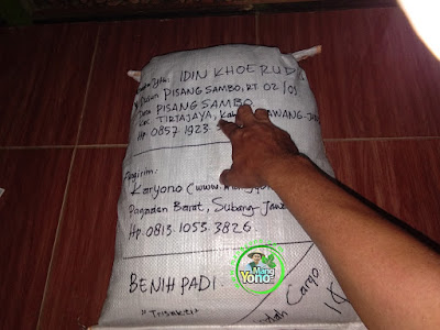 Benih Pesanan  IDIN KHOERUDIN Karawang, Jabar(Sesudah Packing)