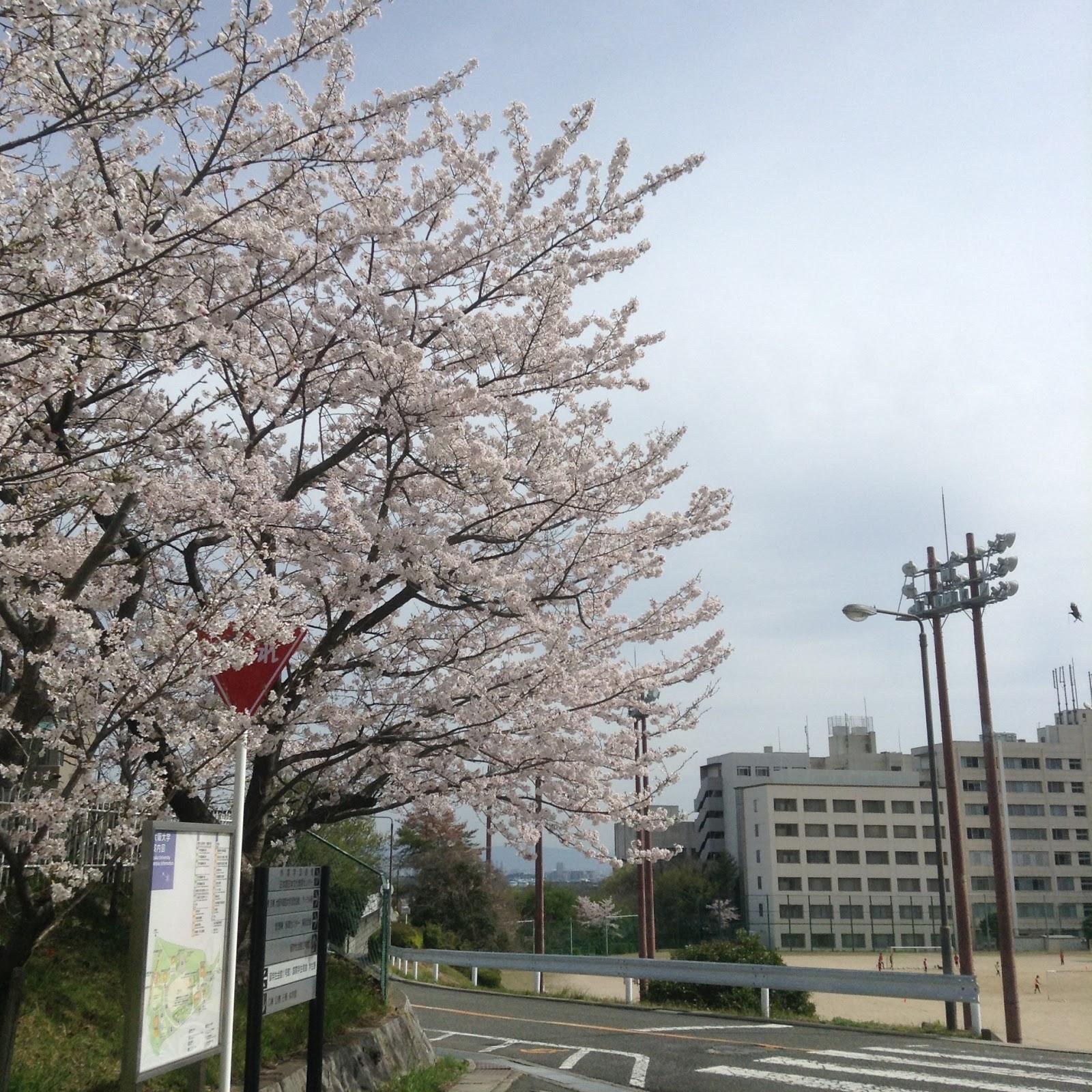 Osaka university Sakura