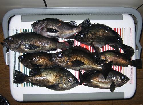 関西の船釣りで釣れる 竿とリール 瀬戸内海 メバル