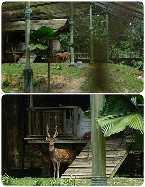 Say Hello to The Little Deer for Me, Sungai Penchala, 吉隆坡,马来西亚