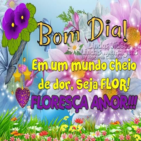 Bom Dia! Em um mundo cheio de dor, seja FLOR! FLORESÇA AMOR!!!