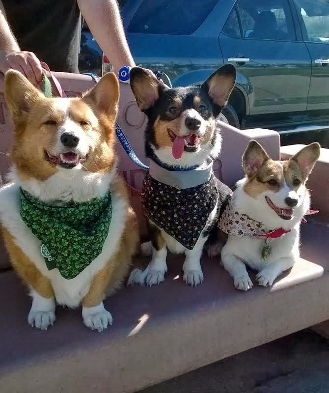 Guest Post: Giving, Gratefulness and Low-Rider Love! - The Daily Corgi