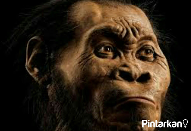 Jenis Jenis Manusia Purba di Indonesia Beserta Ciri Cirinya