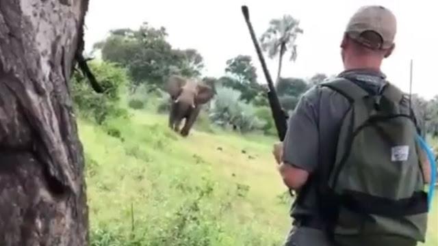 Απίστευτο βίντεο: Σταματάει ελέφαντα που του ορμάει μόνο με το χέρι του!