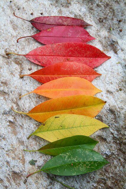 foglie-natura
