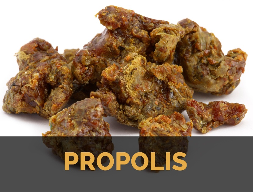 Walatra Propolis Brazil Asli Golden Propolis