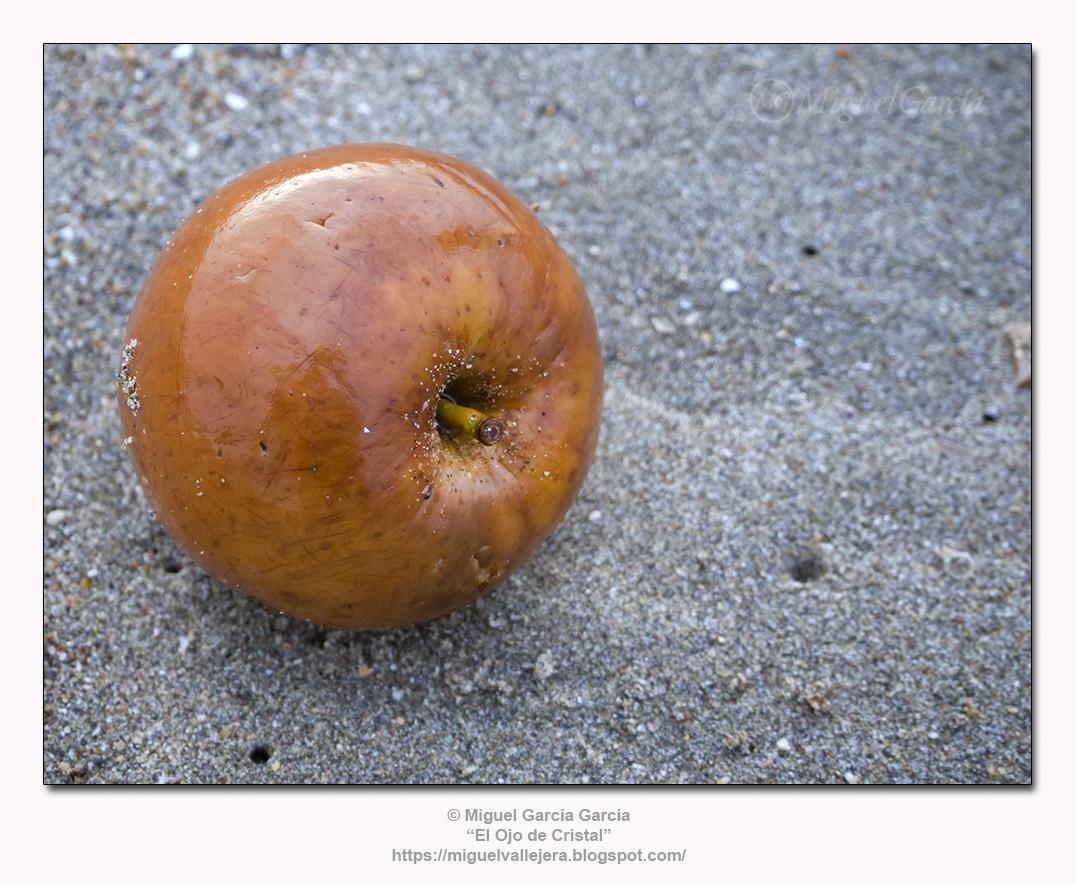 Autorretrato en una manzana.