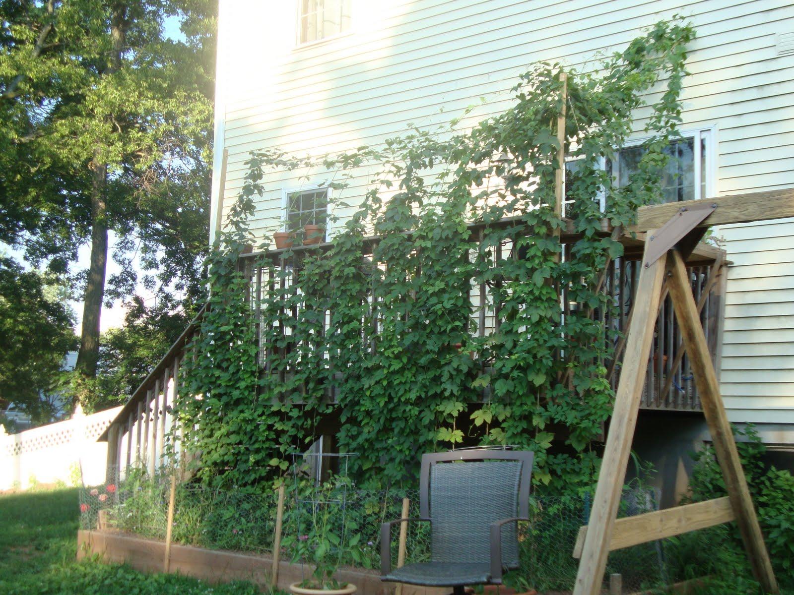 Nolson's Notions: Backyard Hops - Part 3 (July/August ...