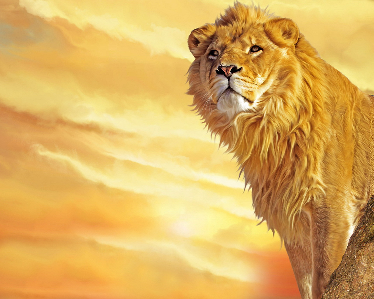 24 Lion Wallpapers For Desktop | Quotes Wallpapers