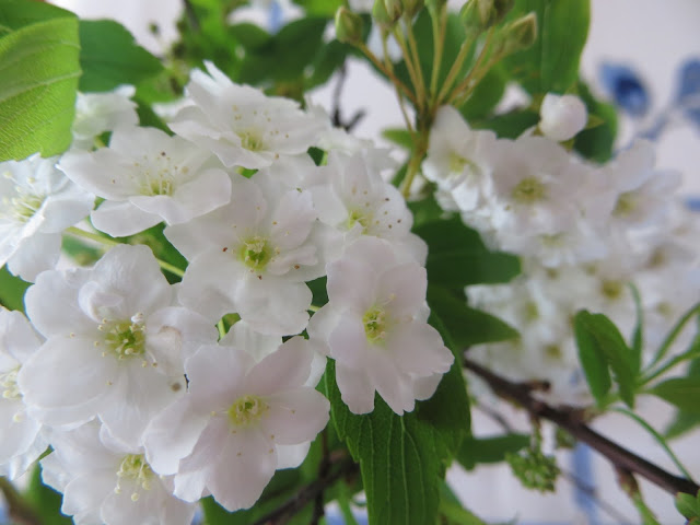 easter flowers spirea