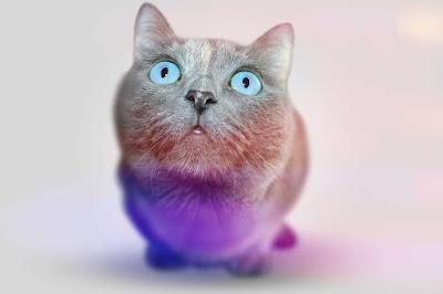 imágenes de gatos, imagen de gatos, fotos de gatos