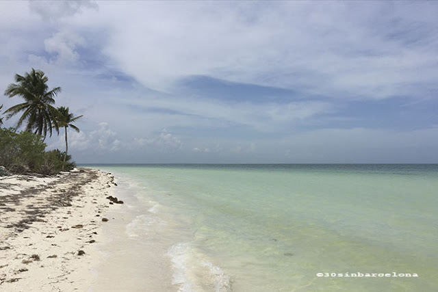 Palm trees and white sand beach in Holbox island