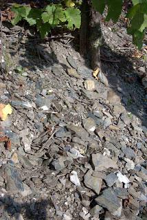 slate soil for riesling