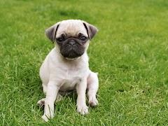 Male Dog Names-B