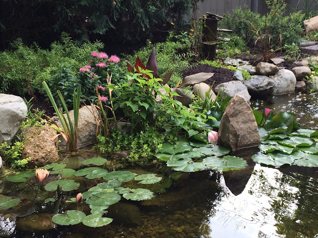 frog bog on pond