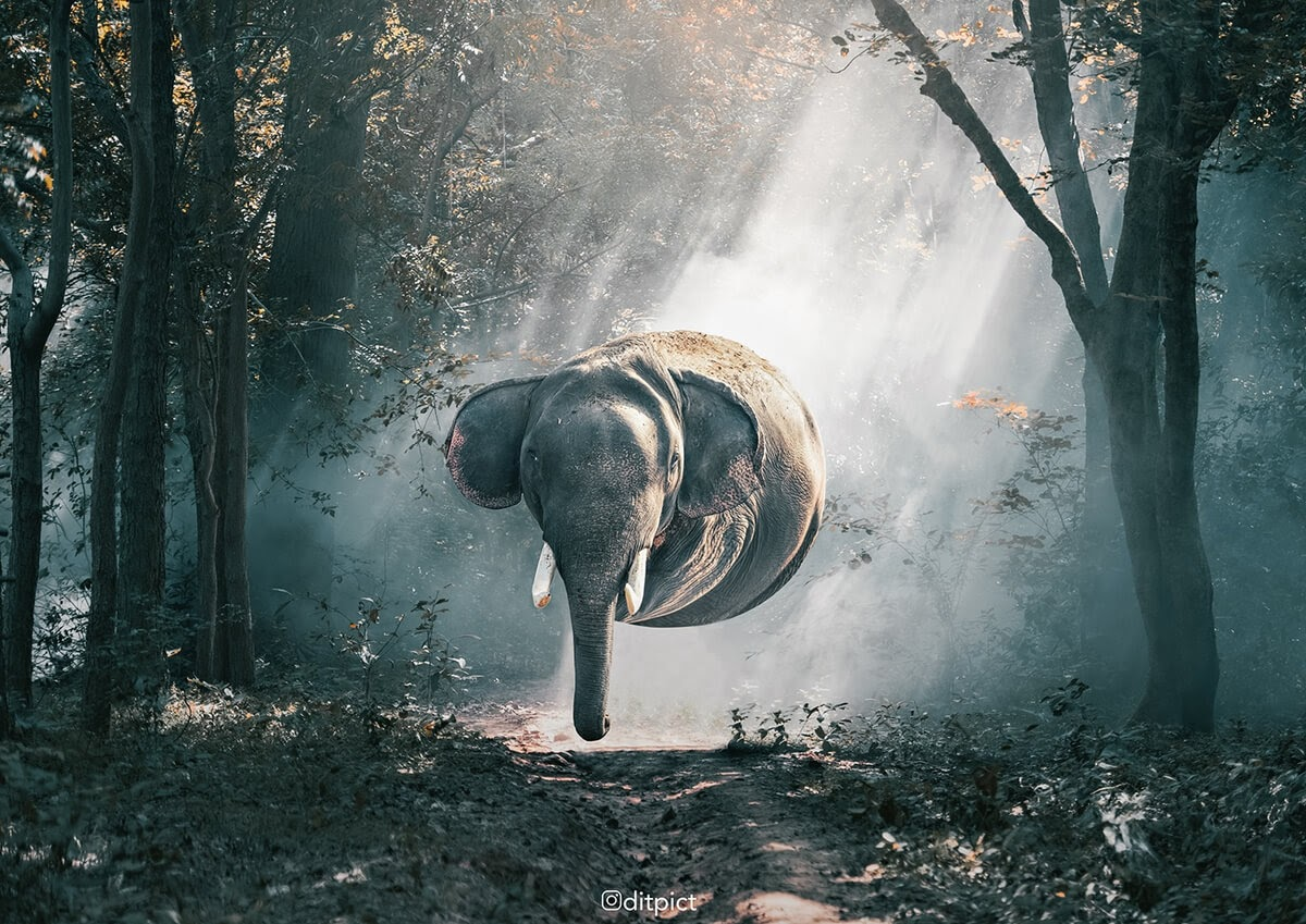 03-Elephant-Aditya-Aryanto-Surreal-Animals-Ball-Photo-Manipulations-www-designstack-co