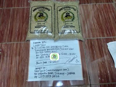 Benih pesanan LAMIJAN Siak, Riau..   (Sebelum Packing)